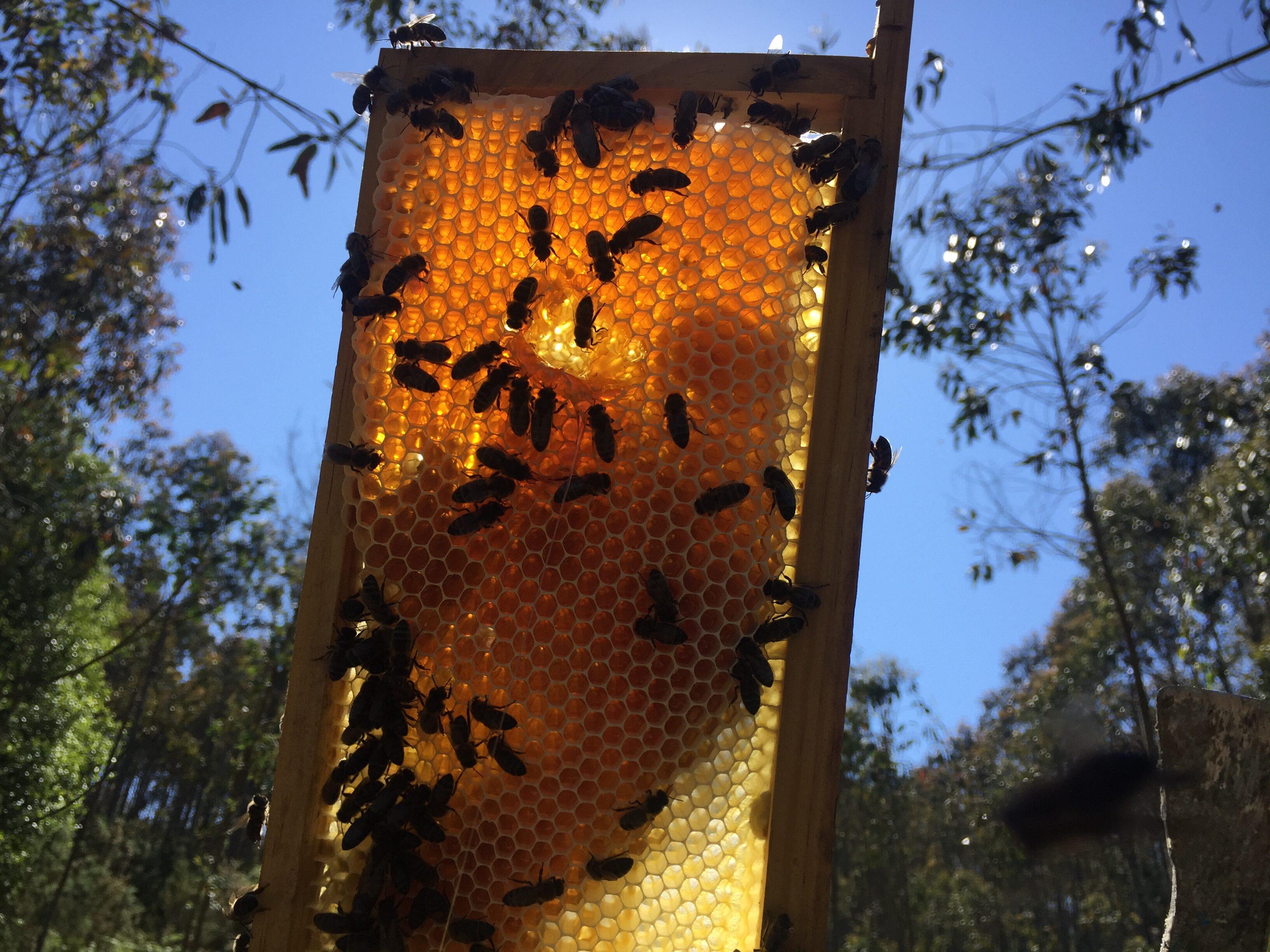 Abejas recolectando miel de primavera