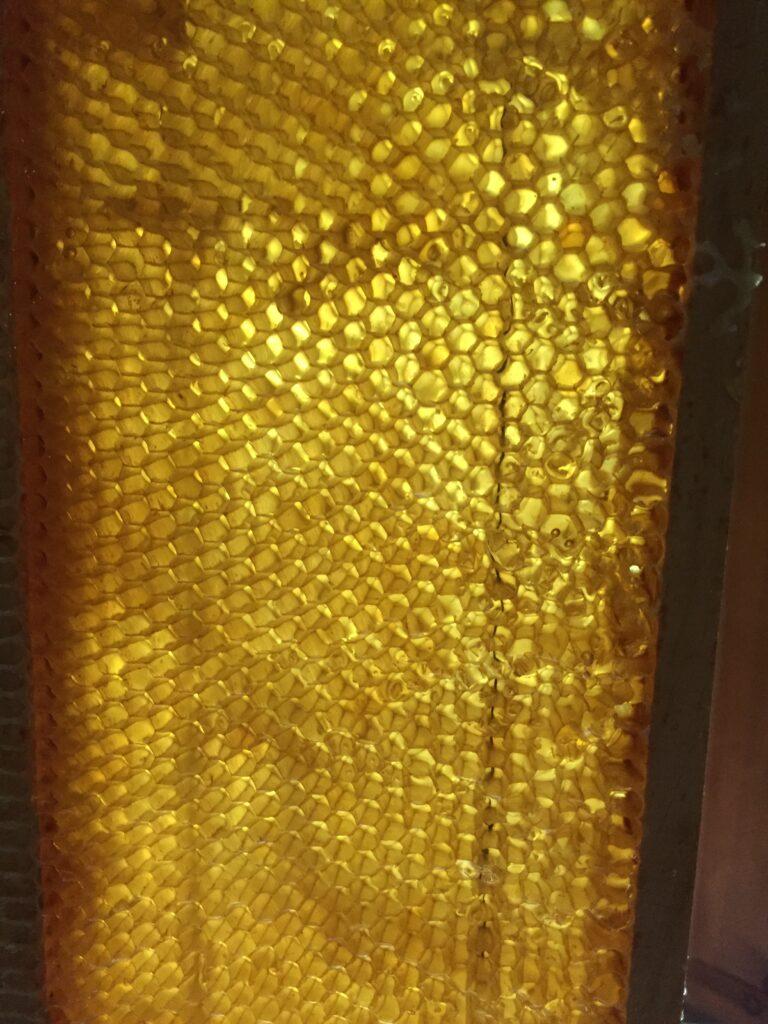 Cuadro de miel despues de extraccion artesanal